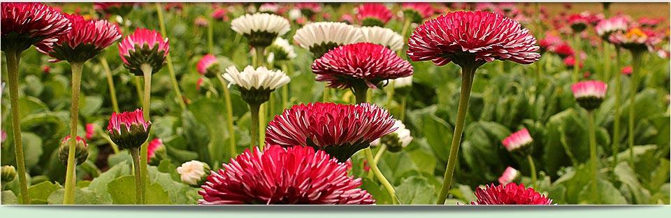ornamentla flowers growing from a seedling tray